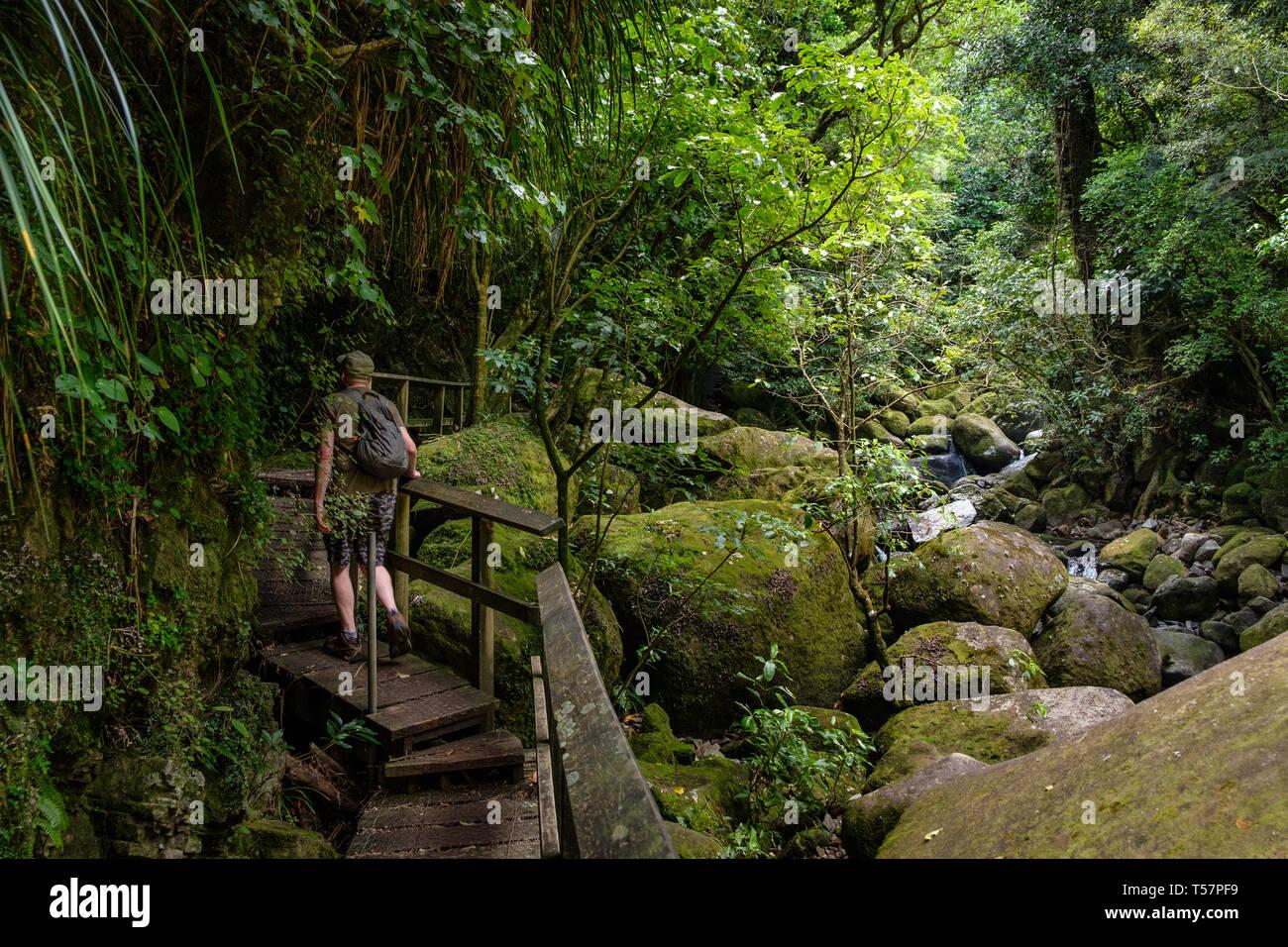 Path by stream in Wairere Falls Park , Okauia, Waikato Region, North Island, New Zealand - Stock Image