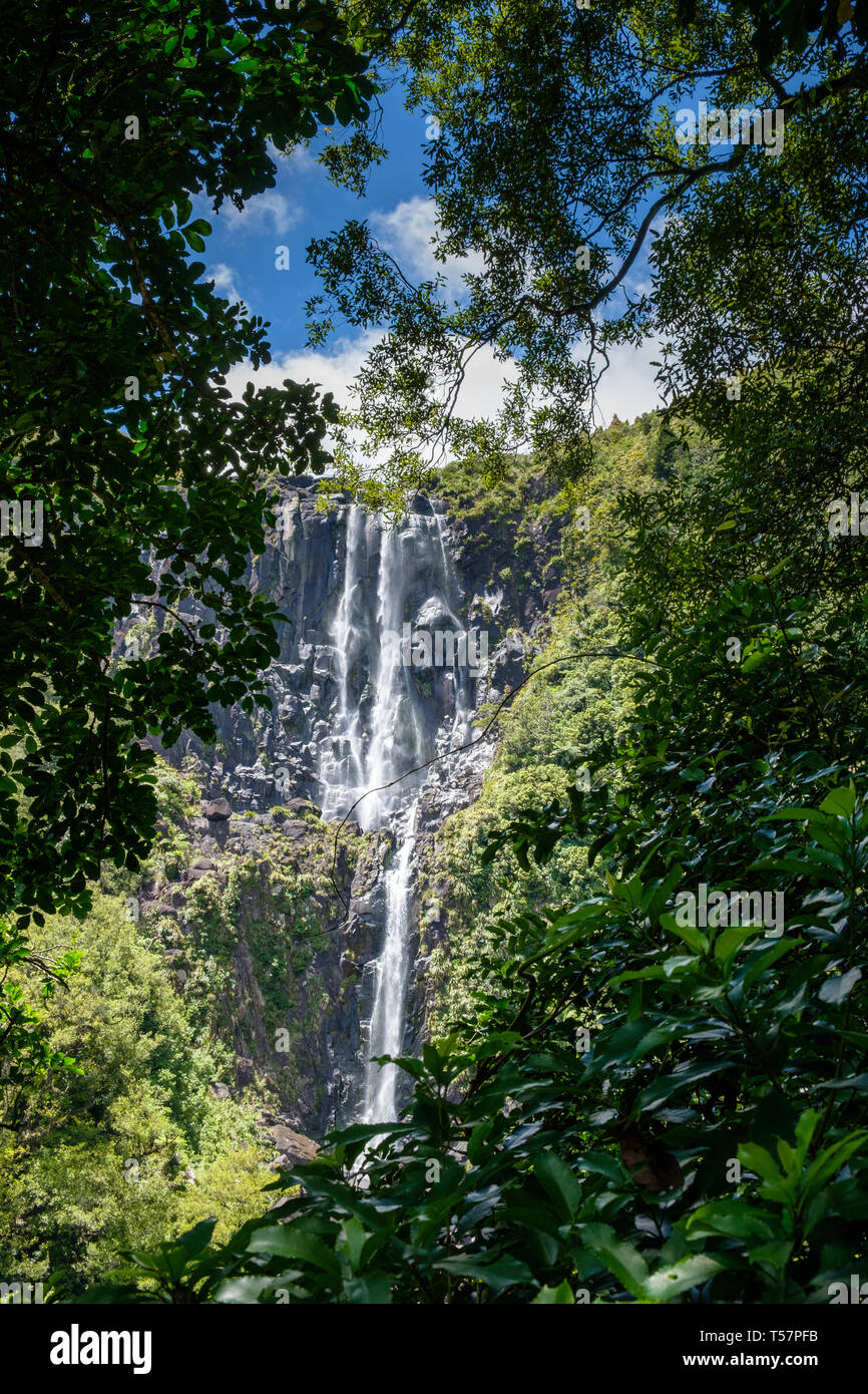 The Highest Falls on The North Island, Wairere Falls Park , Okauia, Waikato Region, North Island, New Zealand - Stock Image