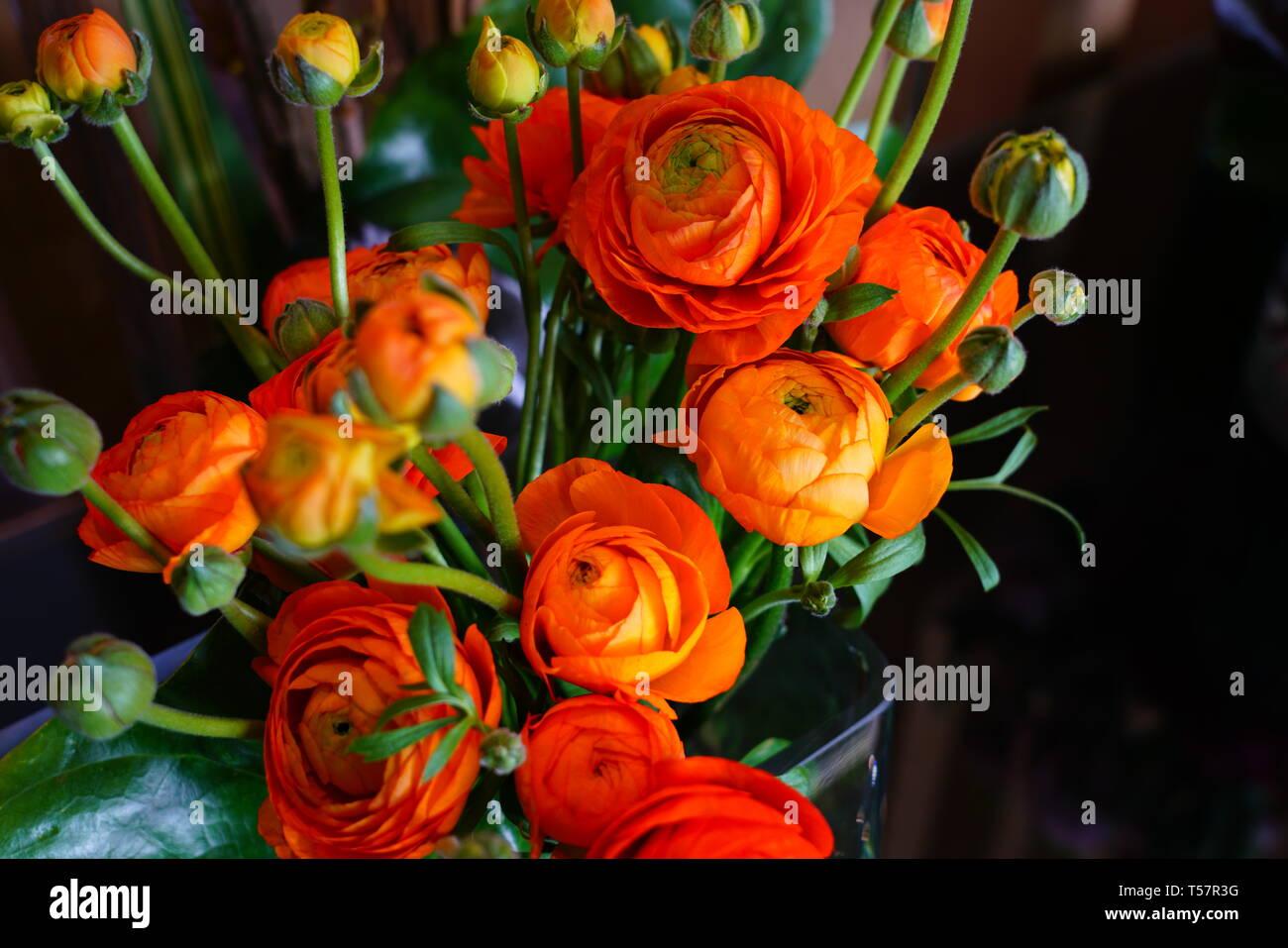 Bouquet Of Orange Ranunculus Flower In Bloom In A Clear Vase Stock Photo Alamy