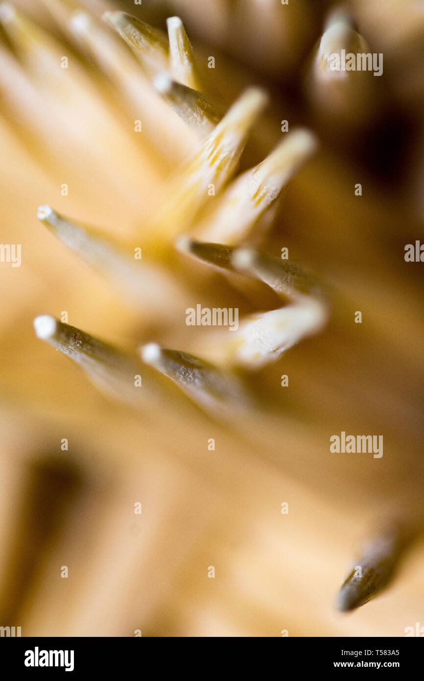 super macro shot of toothpicks that could be used as a background - Stock Image