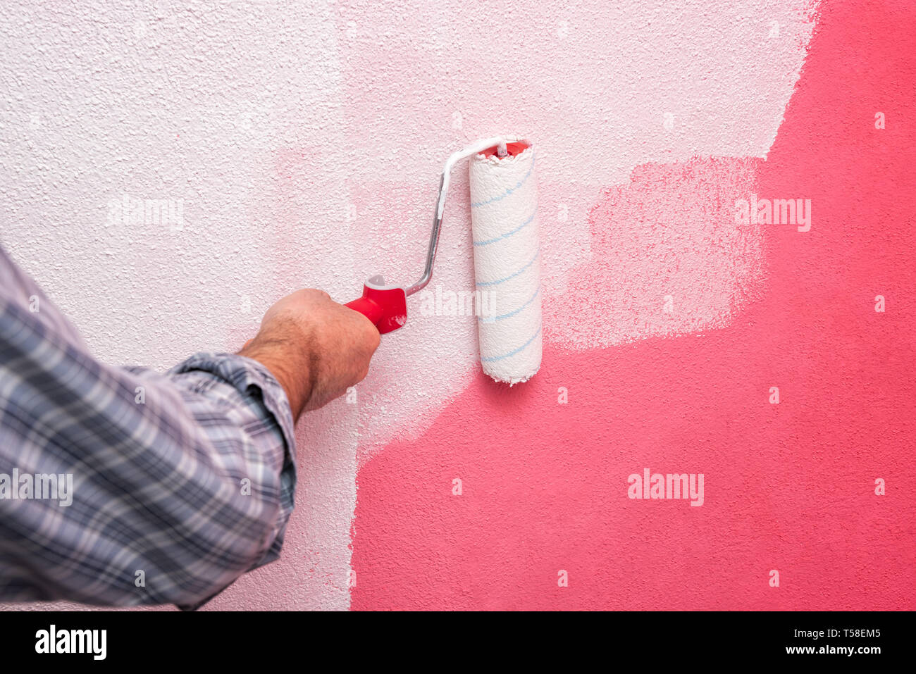 Caucasian house painter worker, painting the pink wall with