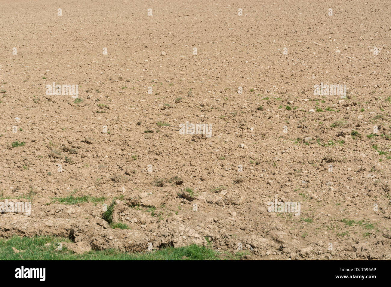 Field in Cornwall, UK, with parched soil after period of little rain. Metaphor for water shortages, dry weather. - Stock Image