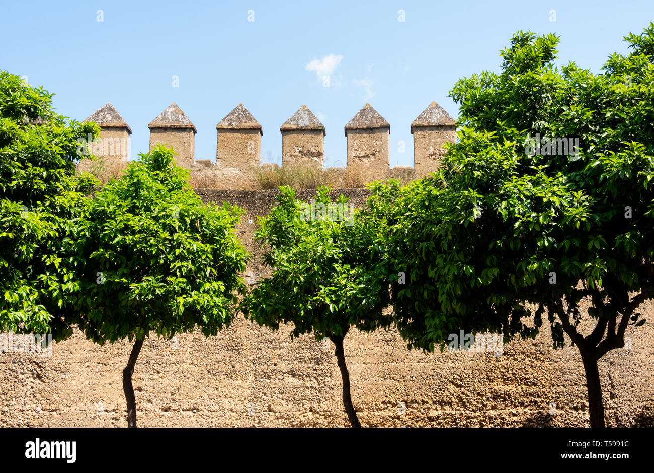 Orange trees in front of the Macarena Wall in Seville - Stock Image