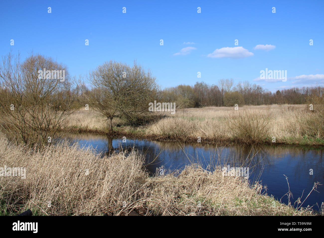 Wald Fluss river forrest Pflanzen - Stock Image
