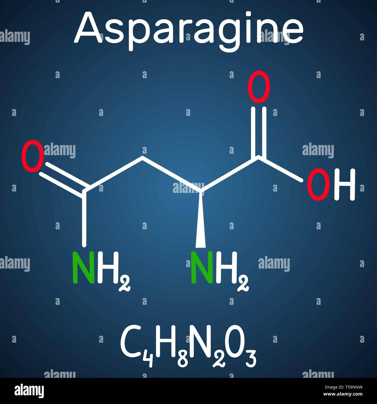 Asparagine (L-asparagine , Asn, N) amino acid molecule. It is is used in the biosynthesis of proteins.  Structural chemical formula on the dark blue b - Stock Image