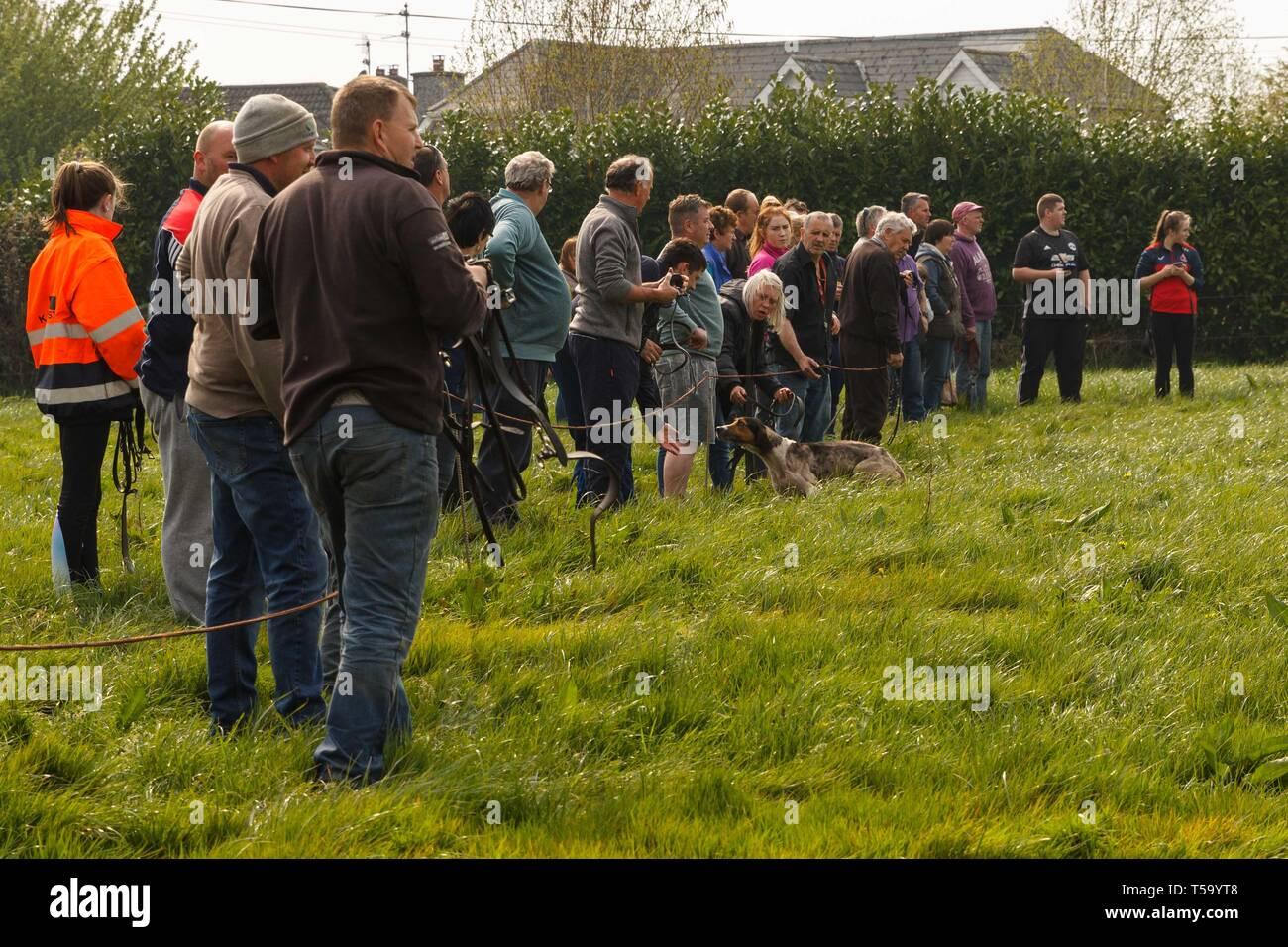 Cork, Ireland, 22nd April, 2019.   Easter Monday Drag Hunt, Killcully, Cork. Stock Photo