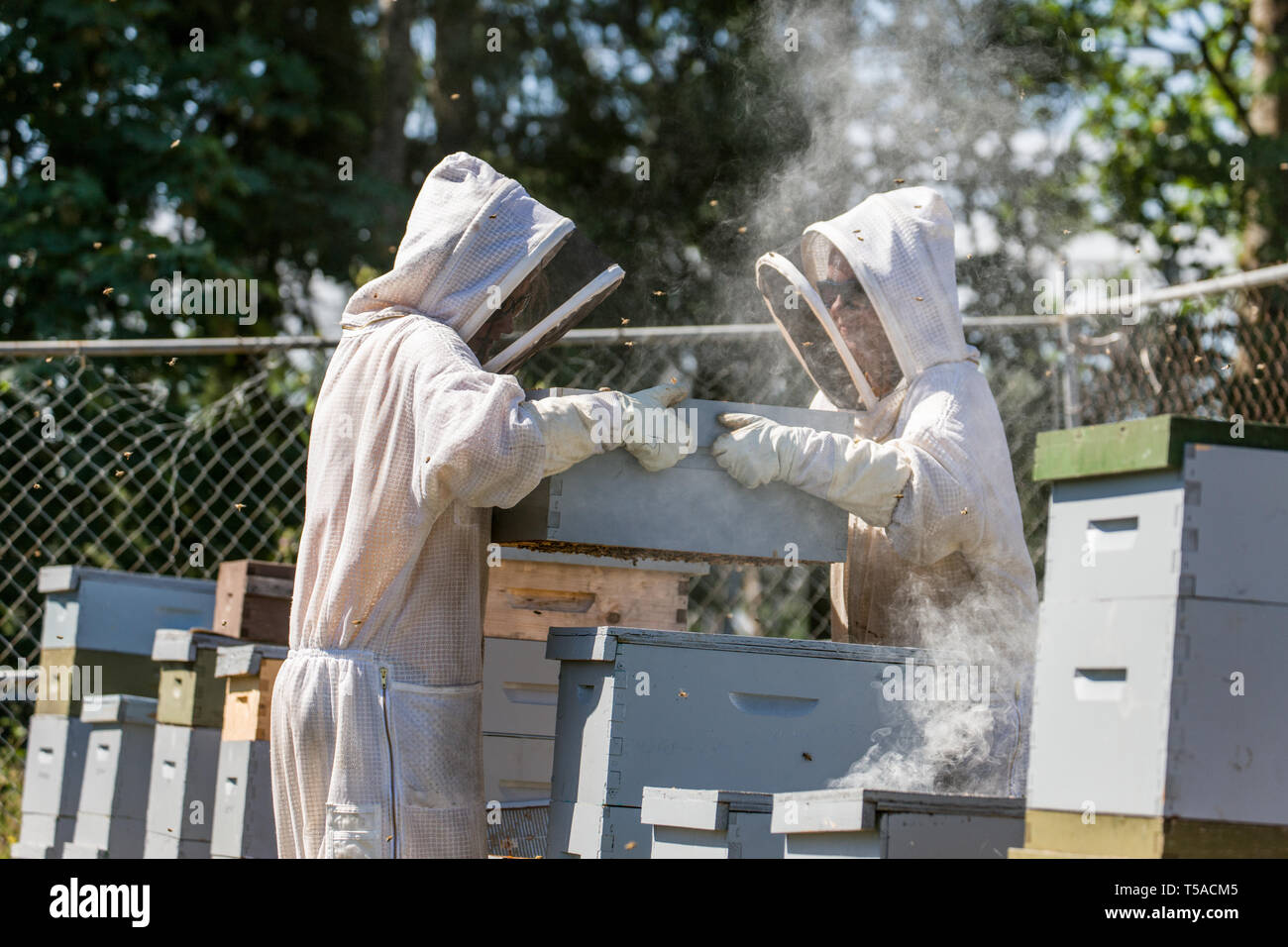 Langstroth Beehive Stock Photos & Langstroth Beehive Stock