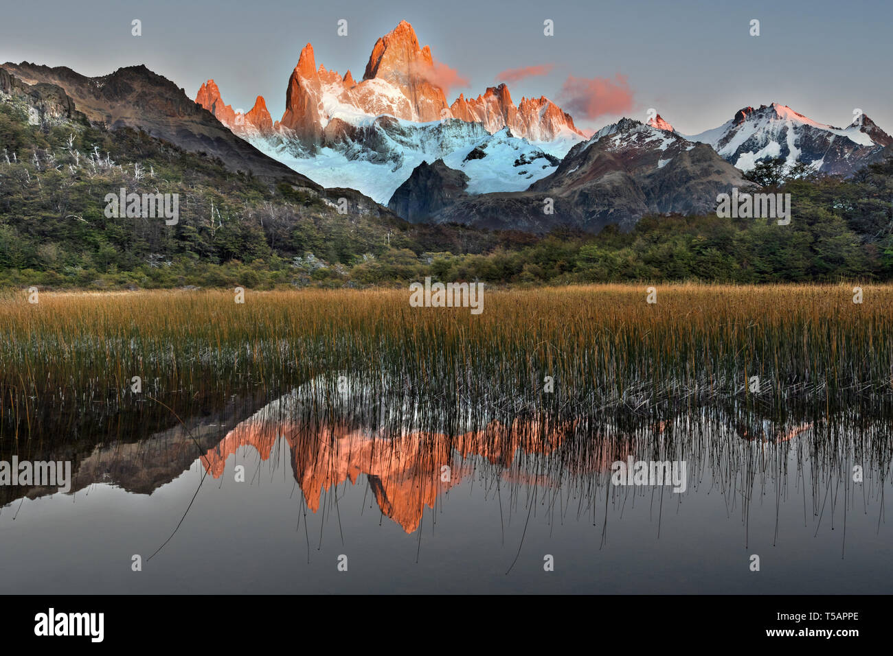 the massif of the Fitz Roy reflected in the laguna Capri, Los Glaciares NP, Argentina - Stock Image
