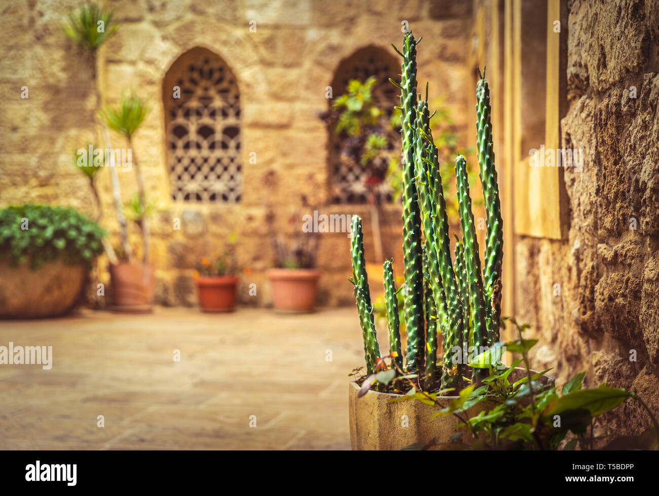 Beautiful yard of a church with fresh cactus in pot, old christian monastery, tourist attraction, Lebanon ancient architecture - Stock Image