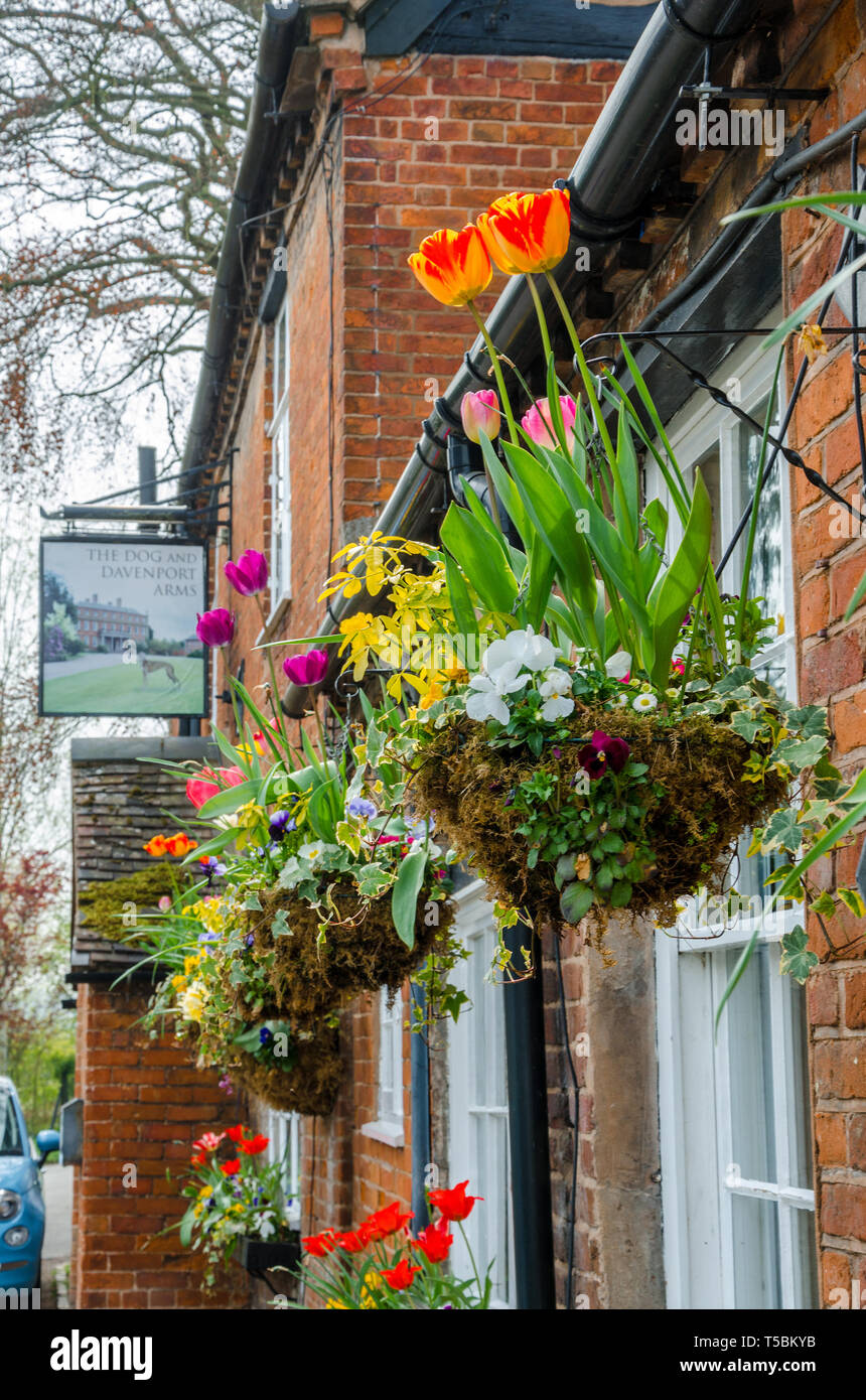 The Dog Inn & Davenport Arms on Main Street in the village of Worfield, Shropshire, UK - Stock Image