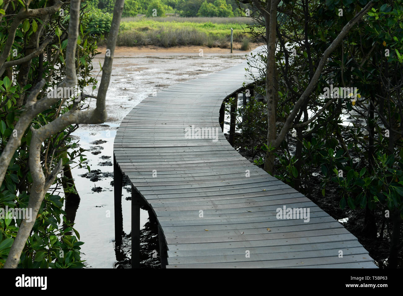 Durban, KwaZulu-Natal, South Africa, backgrounds, path in mangrove swamp of Umgeni river nature reserve estuary, landscape - Stock Image