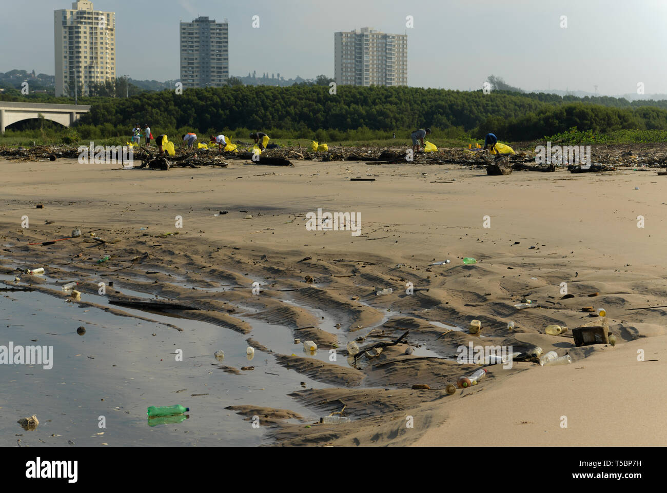 Durban, KwaZulu-Natal, South Africa, plastic pollution, citizen volunteers picking up packaging from beach at high tide mark, Umgeni river mouth, city - Stock Image