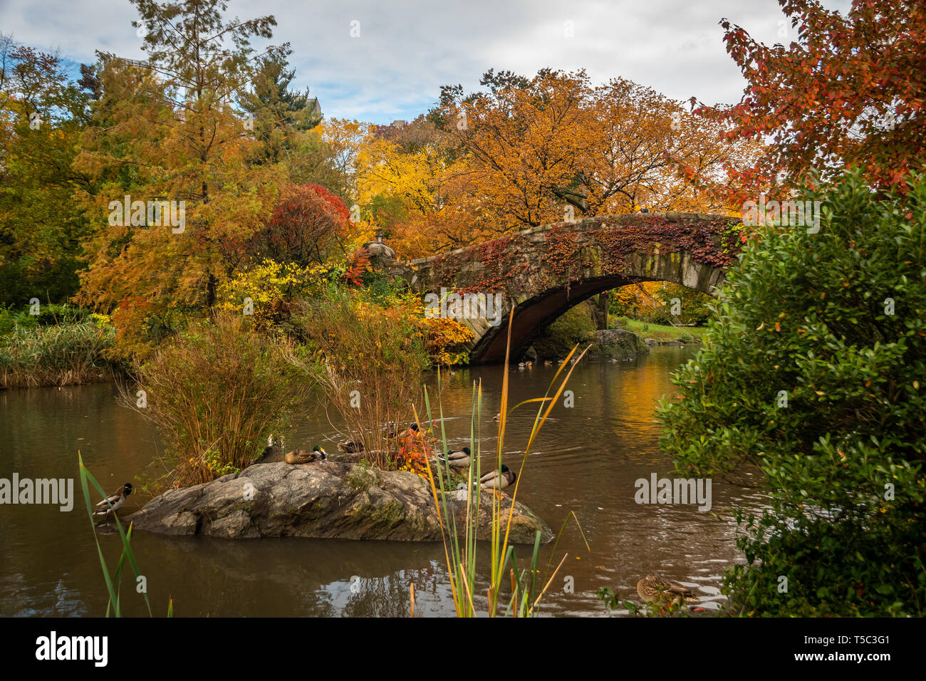 Gapstow Bridge, Central Park, in Autumn - Stock Image