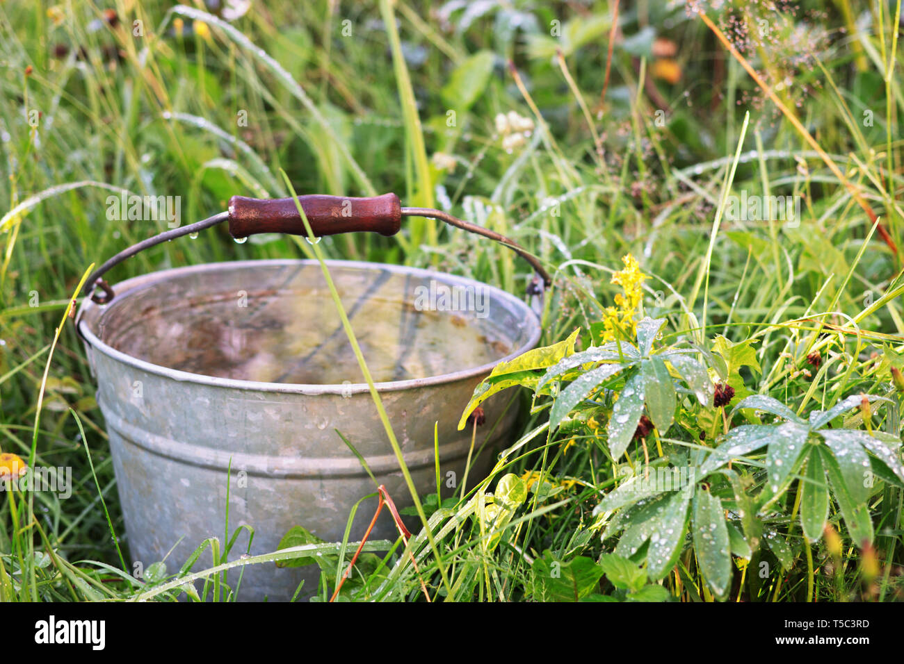 After summer rain. Rain water in the old galvanized iron busket among the high wet grass - Stock Image