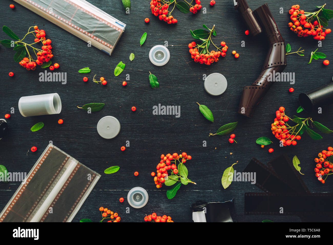 Vintage retro photographic equipment flat lay on dark background decorated wild berry fruit arrangement - Stock Image