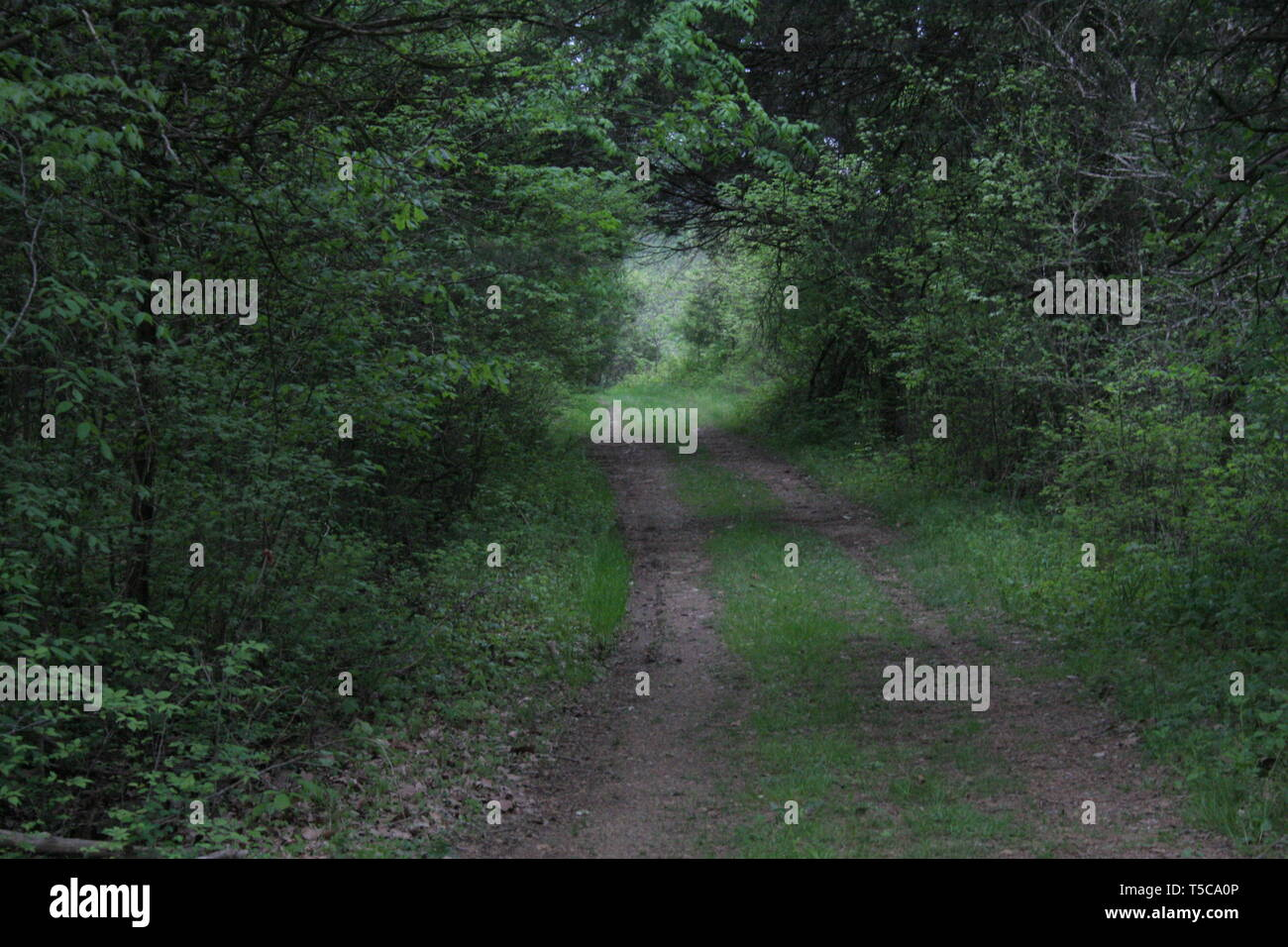 A view of the trail leading into the forest with the light leading the way - Stock Image