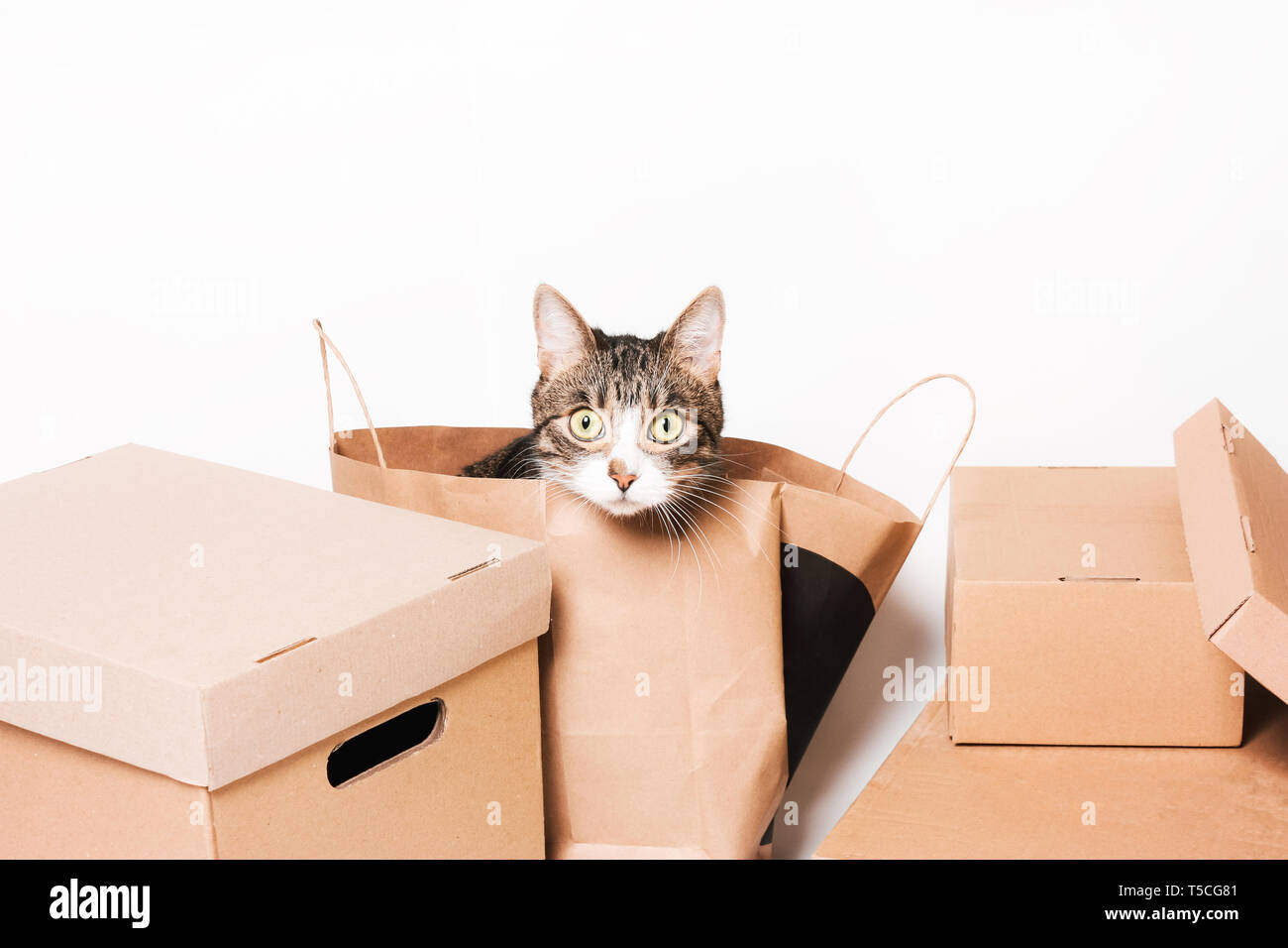 Cute cat looks out of the crafting package. Cardboard boxes. Eco-friendly packaging - Stock Image