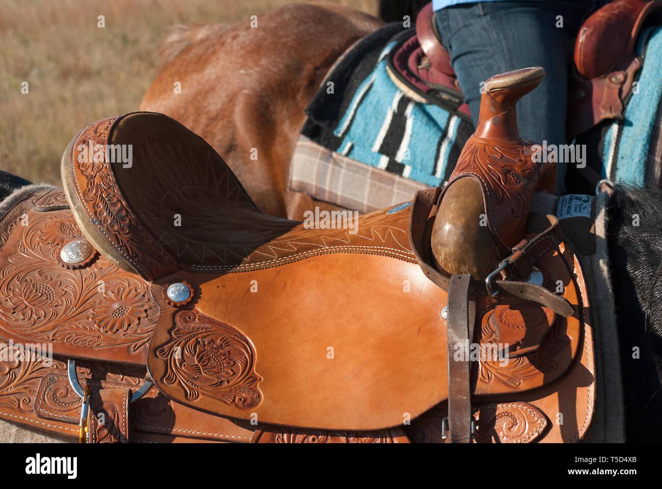 Saddle Saddles Stock Photos & Saddle Saddles Stock Images