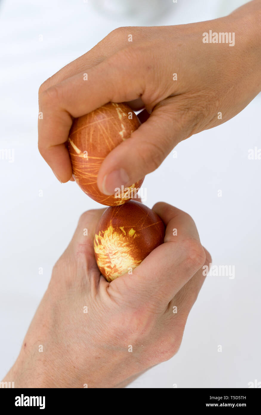 male and female hand tapping naturally colored eggs during Easter over a white background Stock Photo