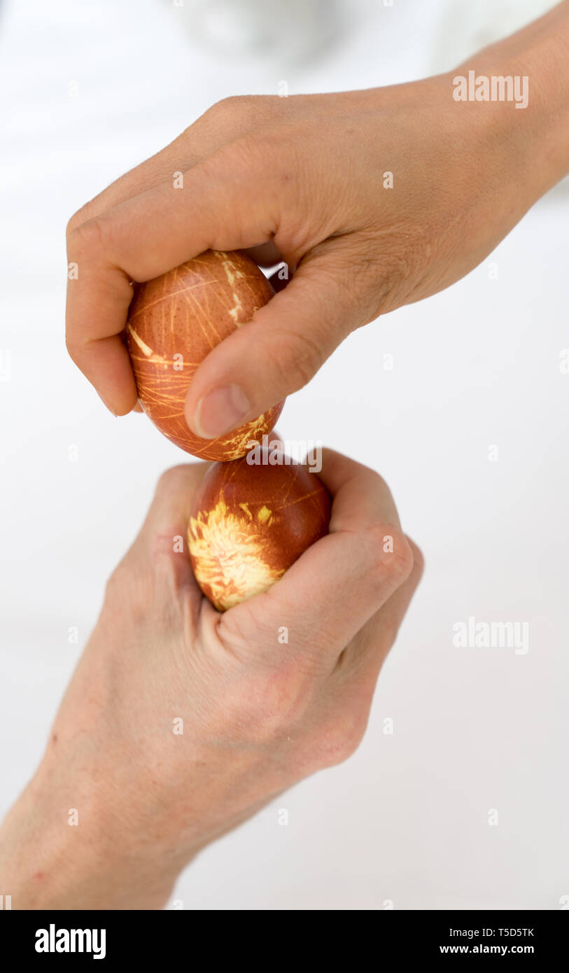 male and female hand tapping naturally colored eggs during Easter over a white background - Stock Image