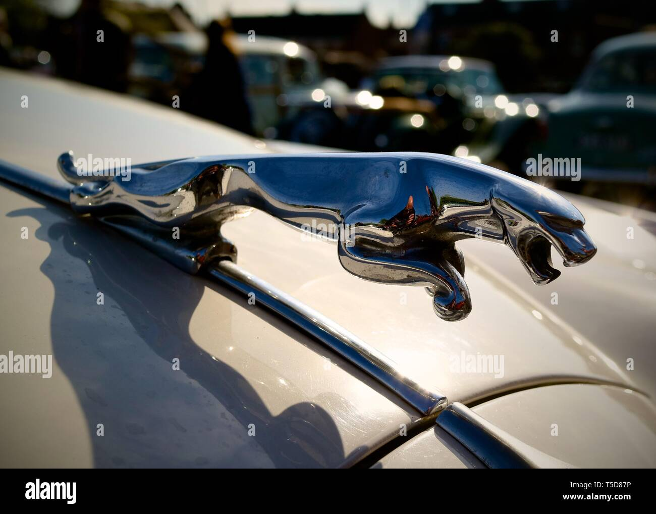 A leaping jaguar on the bonnet of a Jaguar Motor Car - Stock Image
