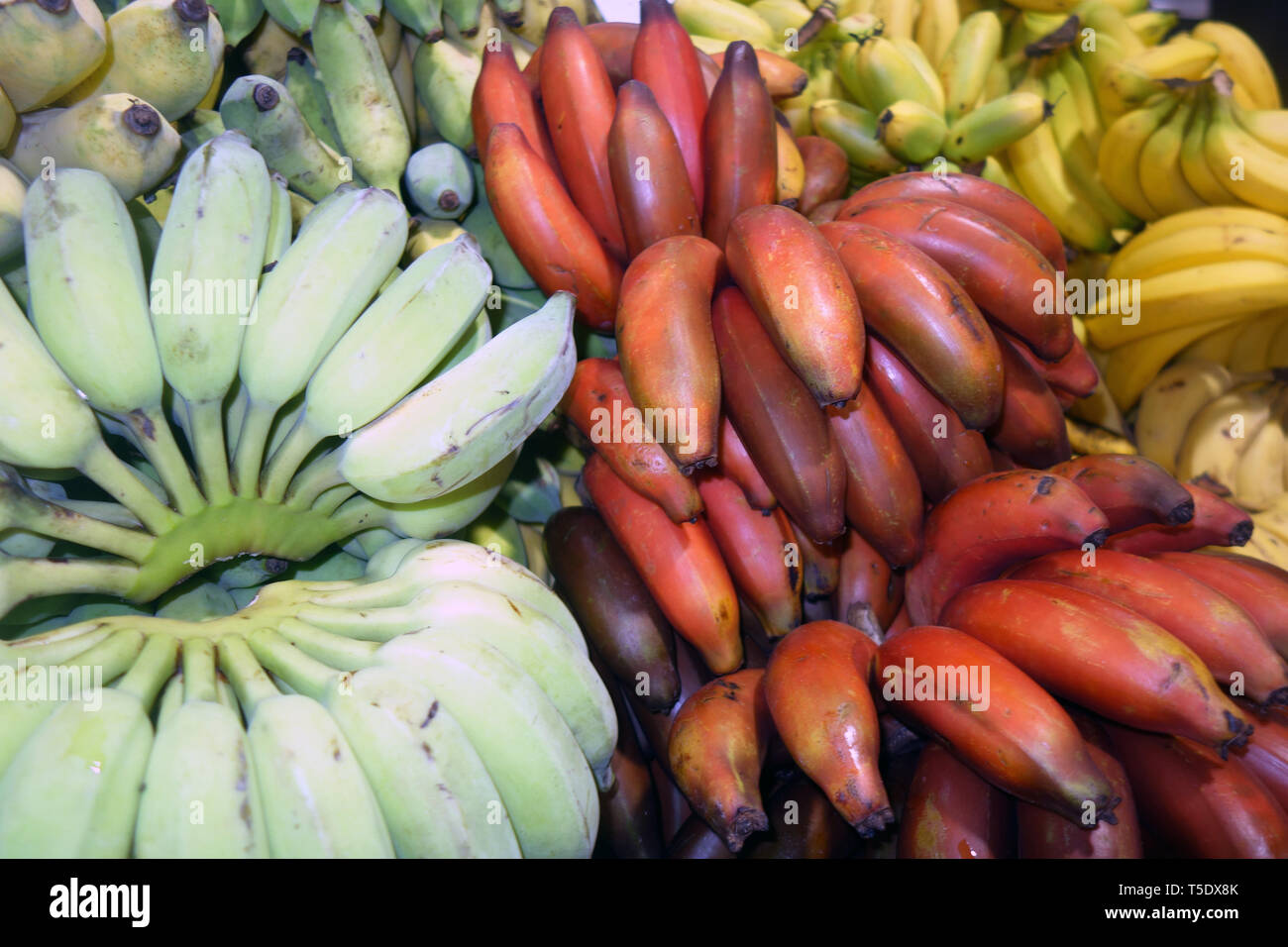 Several different kinds of banana for sale at Rusty's Markets, Cairns, Queensland, Australia - Stock Image