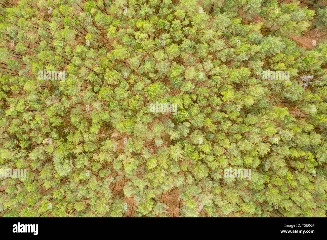 Aerial top view forest, Texture of forest view from above Stock Photo
