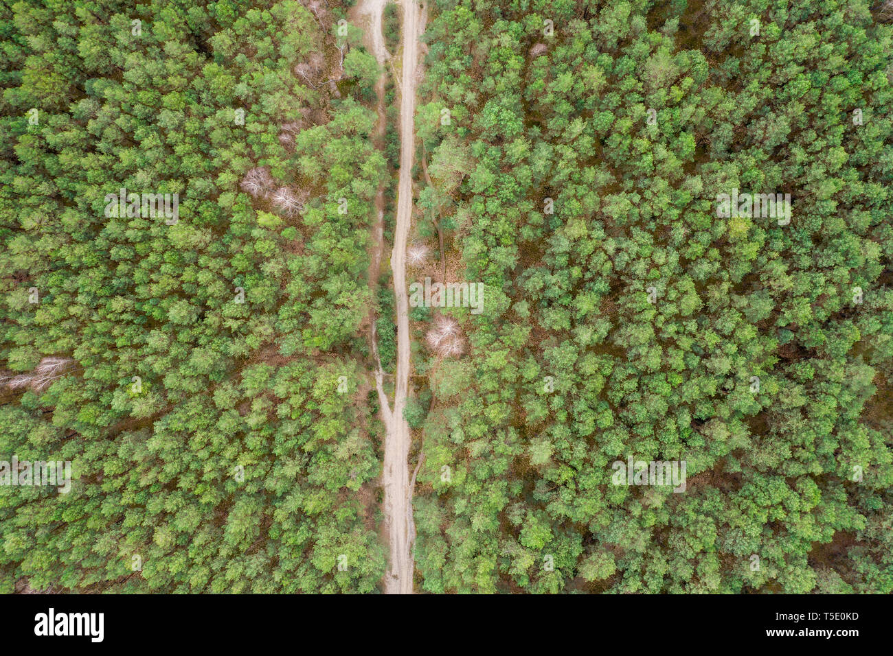Aerial top view forest, Texture of forest view from above. Road in the middle Stock Photo