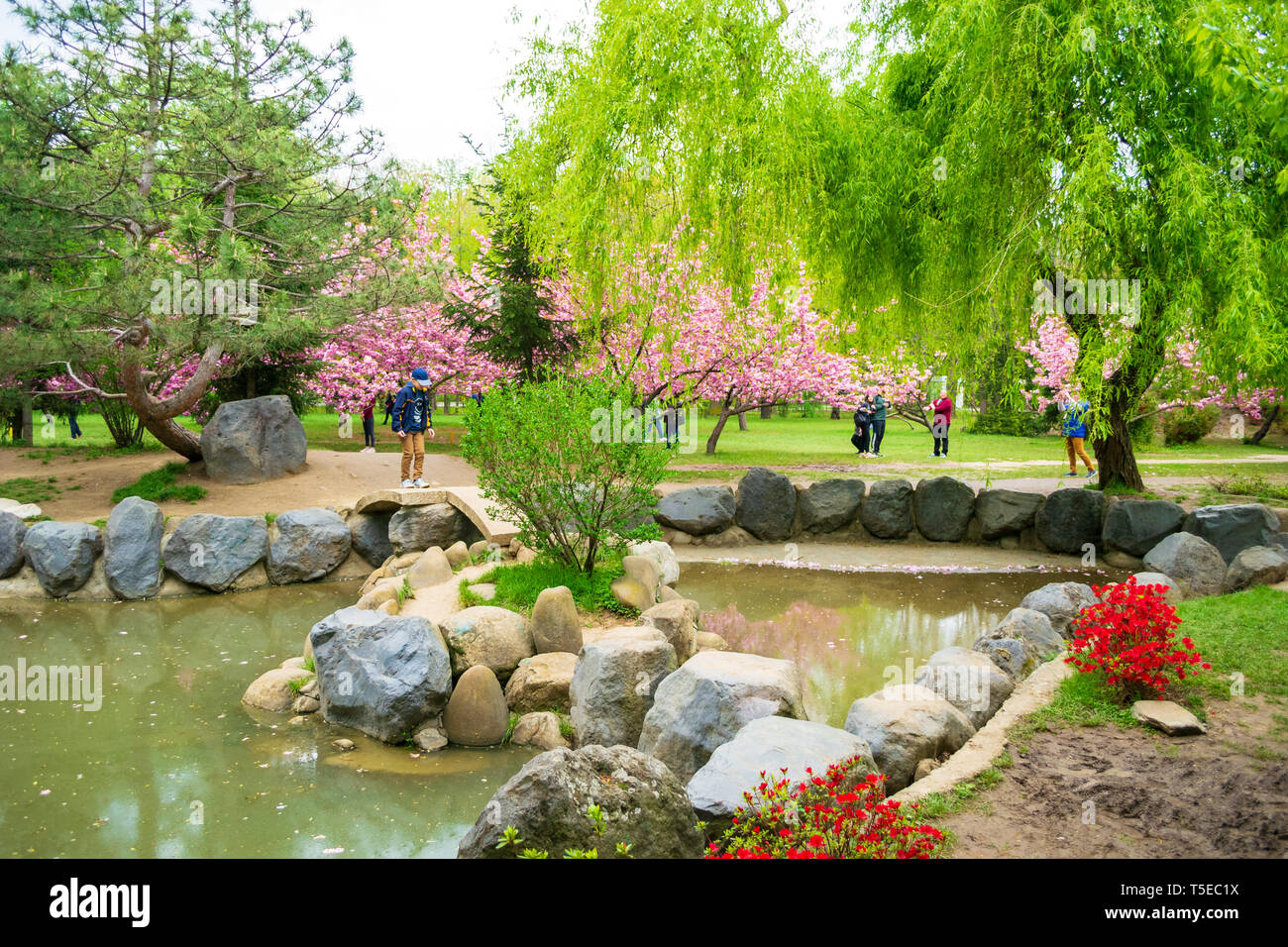 Bucharest, Romania - April 17, 2019: The Japanese Garden in Herastrau Park was brought back to life, in a joint effort by the Embassy of Japan, Buchar - Stock Image