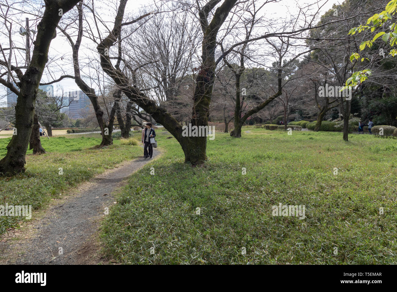 When you decide to visit the Imperial Palace in Tokyo be ready to see only the outside gardens. There is no option to see inside the palace. Stock Photo