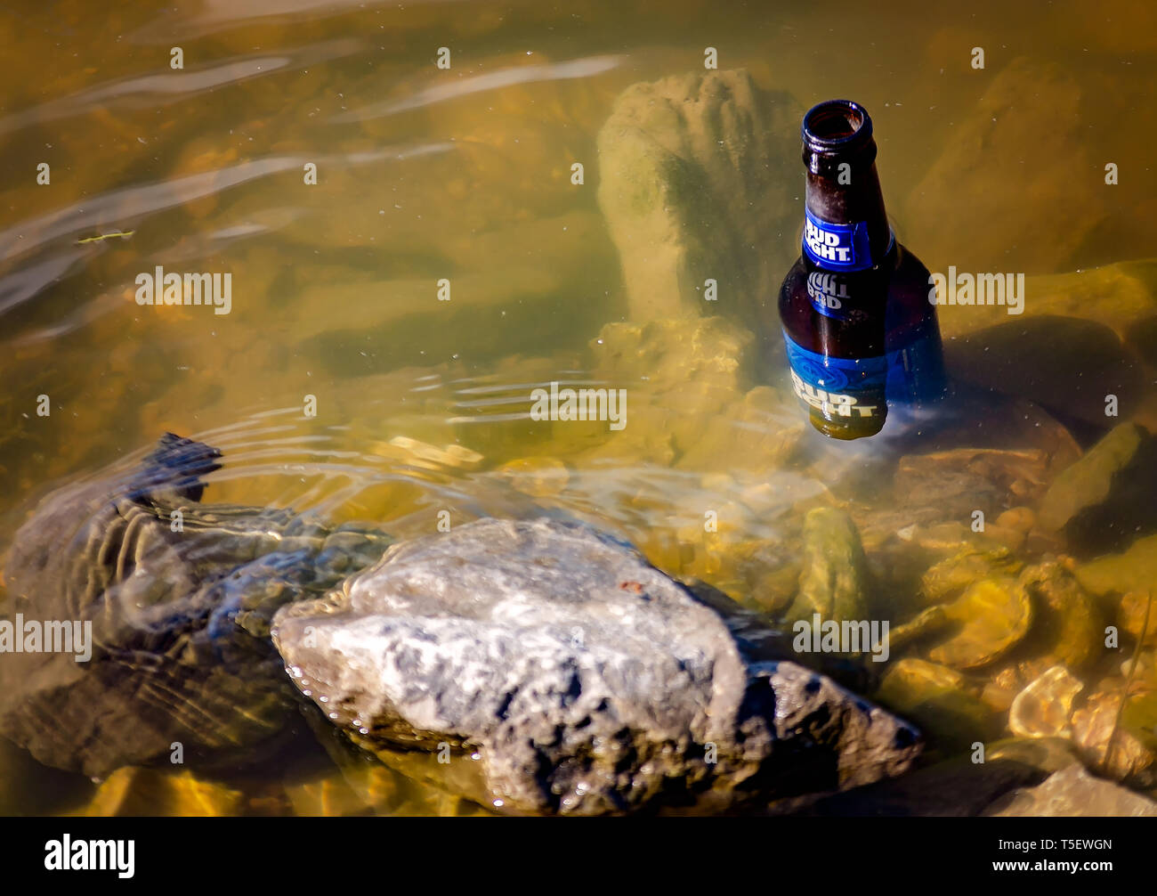 A glass Bud Light beer bottle floats in the water, April 14, 2019, in Bayou La Batre, Alabama. - Stock Image