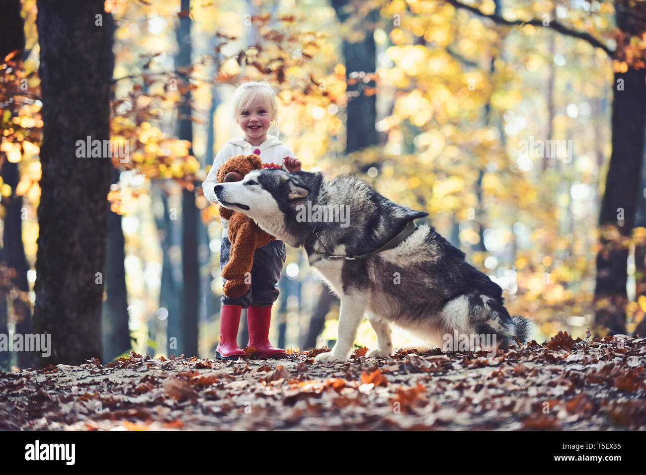 Dog husky with child on fresh air outdoor. Dog and little girl in autumn forest - Stock Image