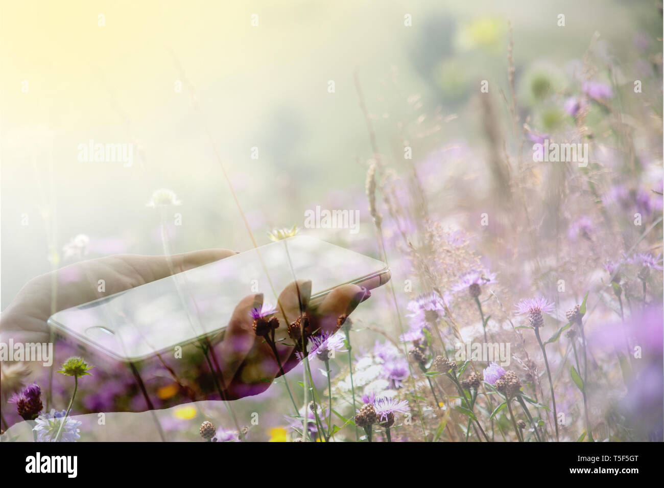 Female hand holding a smartphone against the background of a blooming meadow. Double exposure Stock Photo