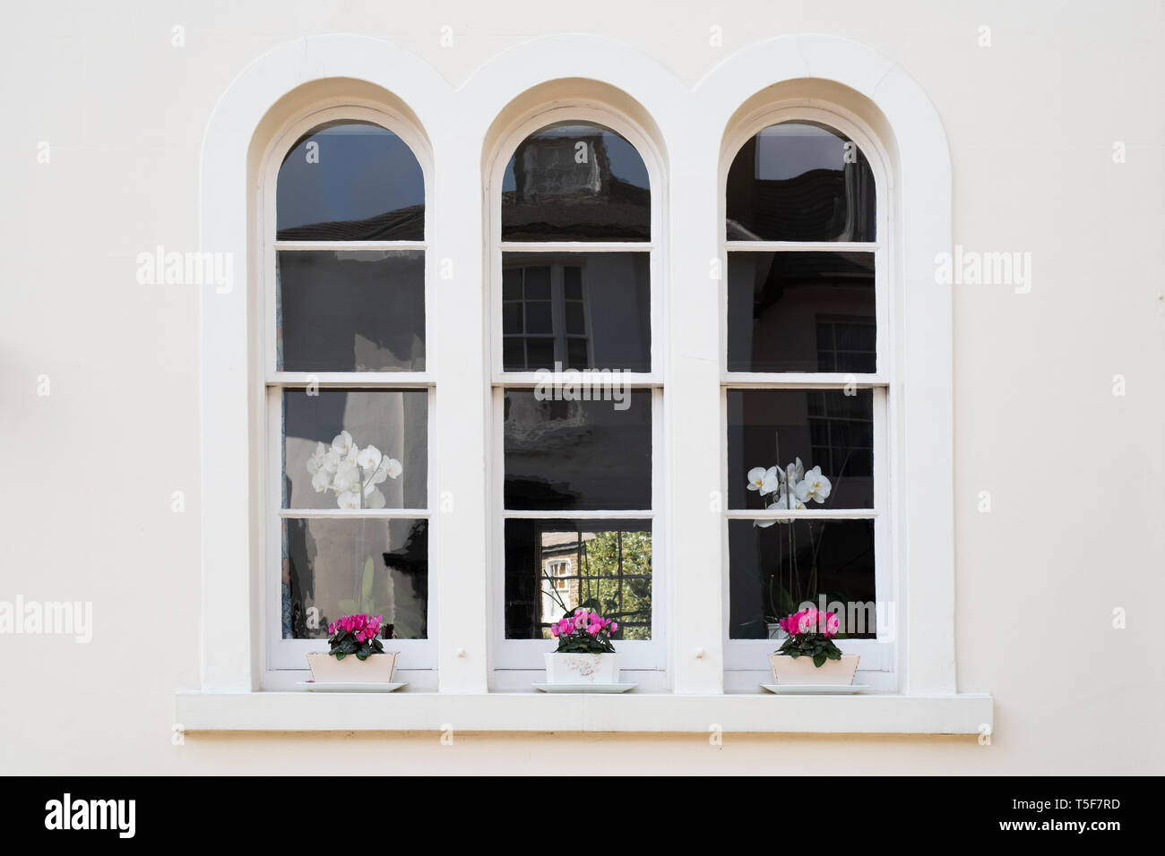 Window boxes and arched house windows in Victoria Grove, Kensington, London, England - Stock Image