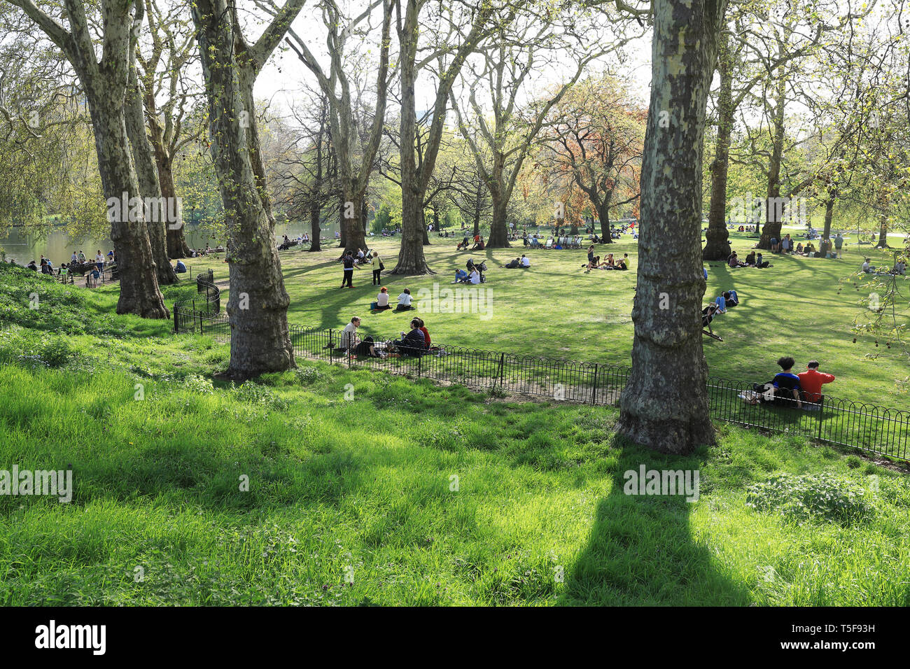 Wooded area leading down to lake in St James's Royal Park, London, UK Stock Photo