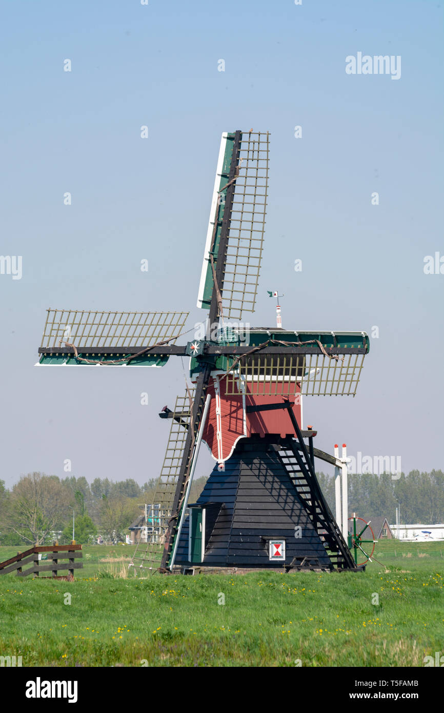 View on traditional Dutch wind mill, spring landscape in North Holland, the Netherlands Stock Photo