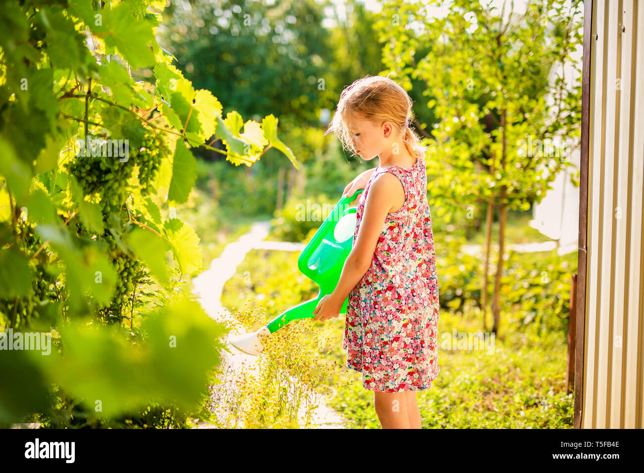 Blonde girl in pink dress watering flowers with green watering-can in the garden. Adorable child helping parents to grow vegetables. Activities with c Stock Photo