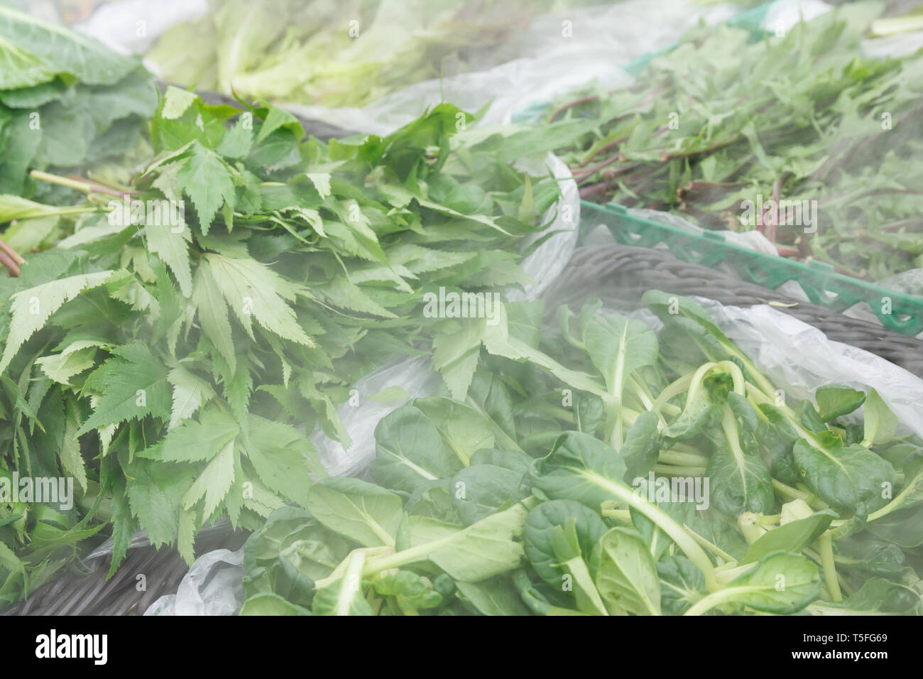 many kinds of vegetables in refrigerator for veggies that keeps food fresh with vapor - Stock Image