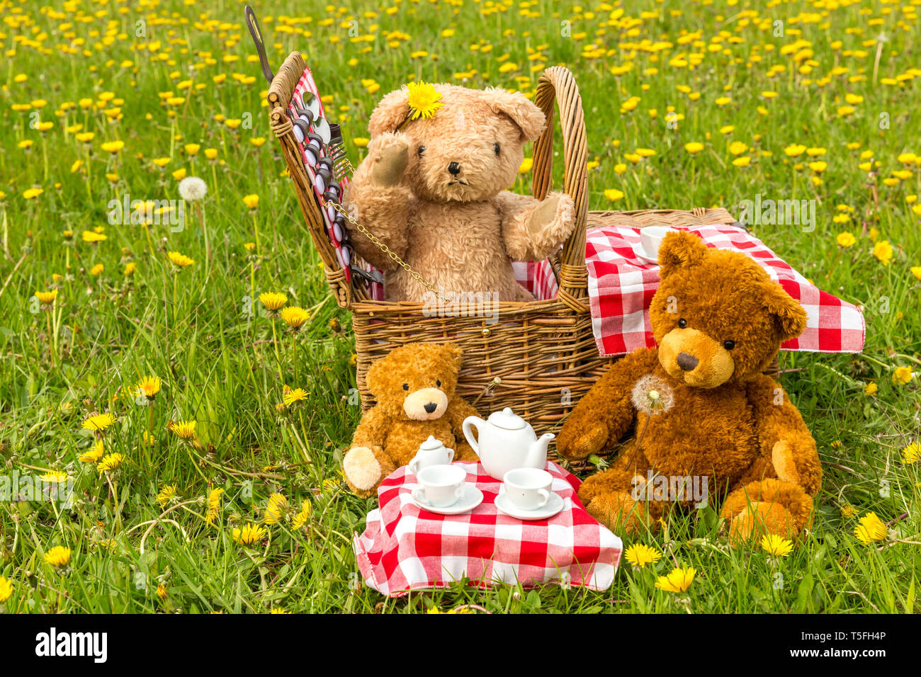 Teddy Bearu0027s Picnic With Bright Yellow Dandelions And Red ...