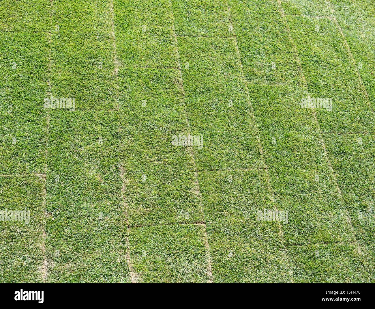 Newly laid lawn showing rolled out turf sections - Stock Image