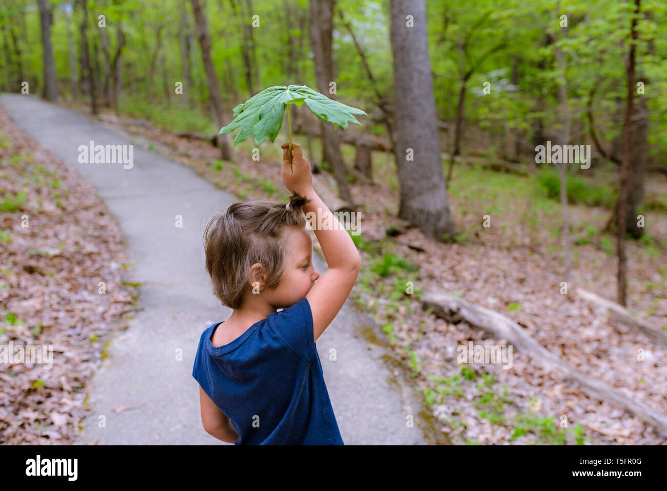 Young girl holding a big leaf in the forest - Stock Image