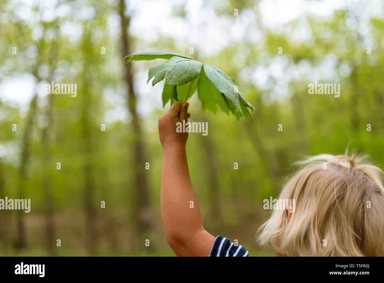 Young girl holding a big leaf in the forest Stock Photo