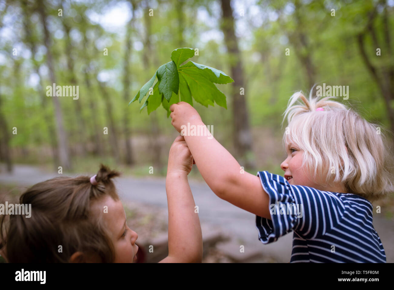 Two little girls holding a big leaf - Stock Image