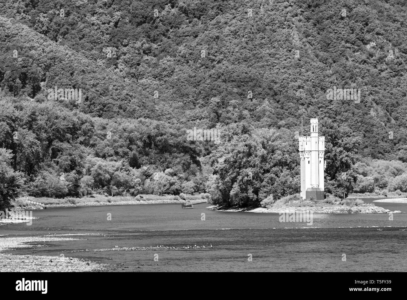 The Binger Mouse Tower, Mauseturm on a small island in the Rhine river in black and white Germany - Stock Image