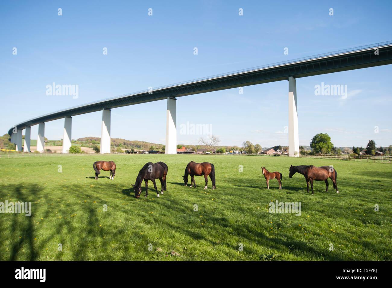 Eine Gruppe von Pferden mit eunem Fohlen weidet unter der Ruhrtalbruecke im Ruhrtal bei Mülheim Mintard - Stock Image
