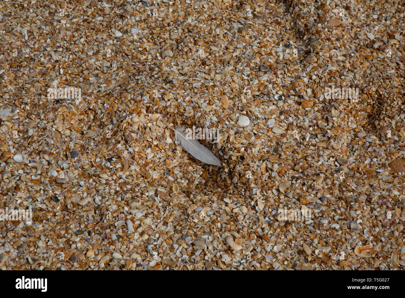 Feather Found in the Sand Stock Photo