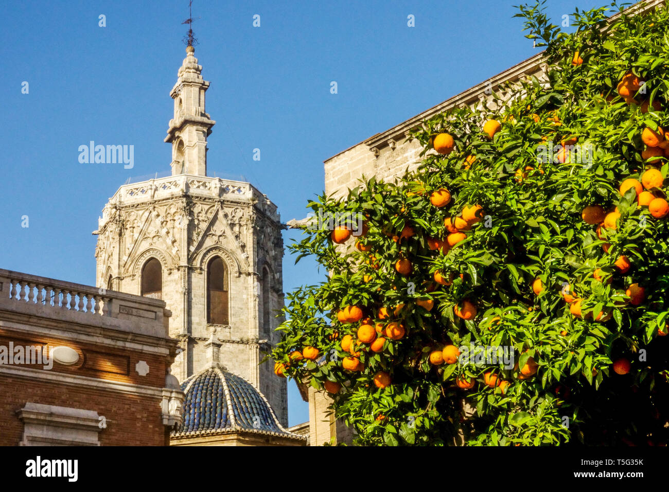 Valencia Spain Architecture Valencia Cathedral Bell Tower, Valencia Oranges tree Spain Old Town Stock Photo