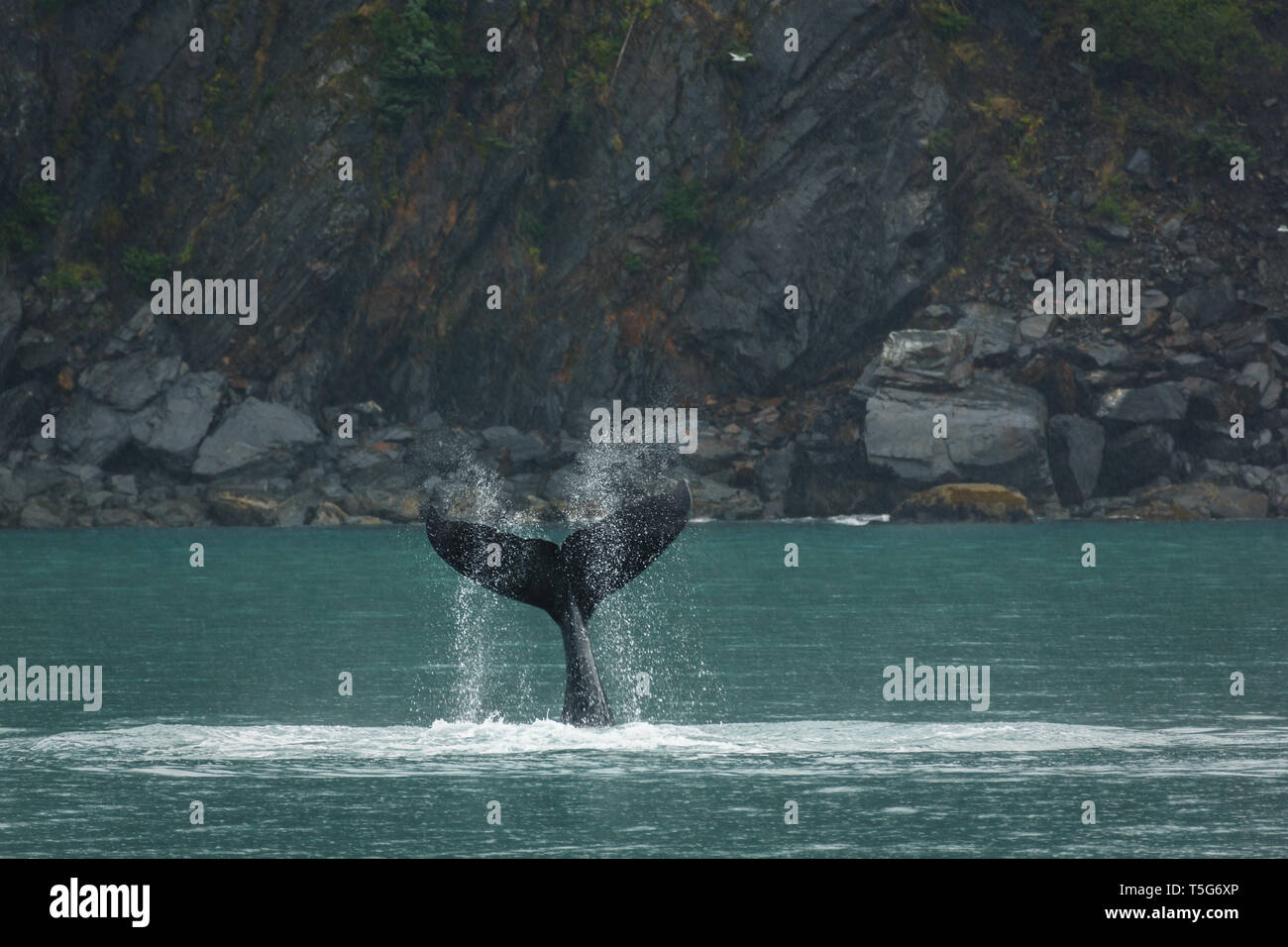 Closeup of the spray from the fluke of a whale lob-tailing in the ocean - Stock Image