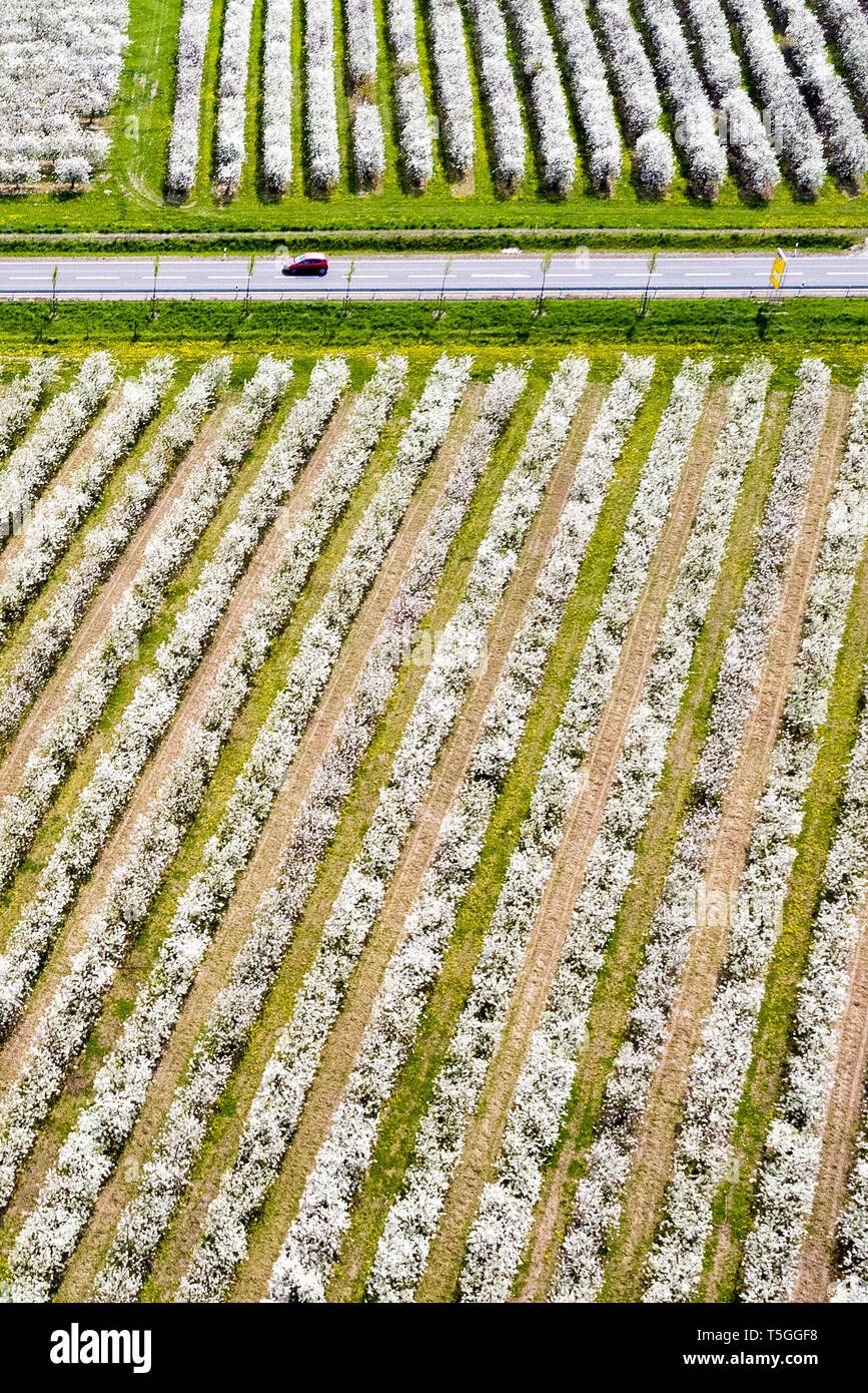Sornzig, Germany. 23rd Apr, 2019. A road leads through the fruit-growing area of Obstland Dürrweitzschen AG (aerial view with a drone). So far, fruit growers in Saxony and Saxony-Anhalt are looking to 2019 with satisfaction. The fruit blossom is running excellently and there have not yet been any worries about the drought. Credit: Jan Woitas/dpa-Zentralbild/dpa/Alamy Live News - Stock Image