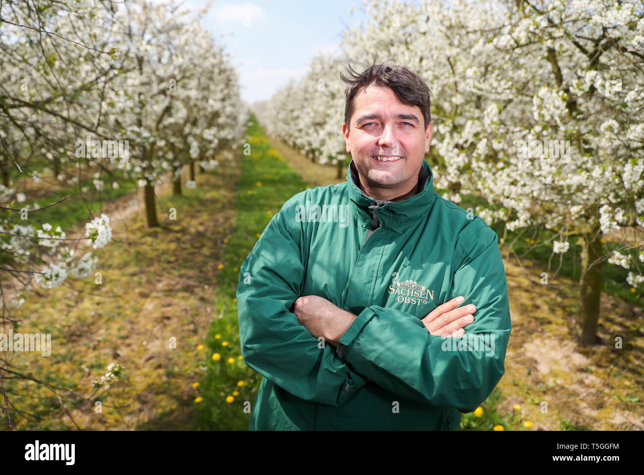 Sornzig, Germany. 23rd Apr, 2019. Jan Kalbitz, board member of Obstland Dürrweitzschen AG, stands in a grove of flowering sour cherries. So far, fruit growers in Saxony and Saxony-Anhalt are looking to 2019 with satisfaction. The fruit blossom is running excellently and there have not yet been any worries about the drought. Credit: Jan Woitas/dpa-Zentralbild/dpa/Alamy Live News - Stock Image